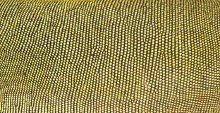 iguany zielona skóra fotografia stock