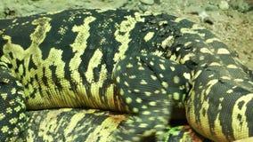 Iguany zwierzę w zoo zdjęcie wideo