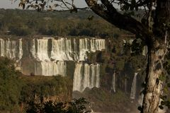 Iguassu cade con gli alberi Fotografie Stock Libere da Diritti