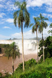 Iguassu falls Royalty Free Stock Images