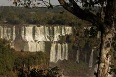 Iguassu tombe avec des arbres Photos libres de droits