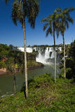 Iguasu Falls, Argentina Brazil. MW - Iguasu Falls seen through a row of palm trees Stock Images