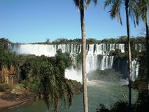 Iguazú Falls 2. View of the Iguazú falls behind the trunk of a palm tree in a sunny day with an unusual caudal of the river and its rich vegetation Stock Photography