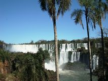 Iguazú Falls. View of the Iguazú falls behind the trunk of a palm tree in a sunny day with an unusual caudal of the river and its rich vegetation Stock Photo