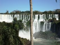 Iguazú Falls. View of the Iguazú falls behind the trunk of a palm tree in a sunny day win an unusual caudal of the river and its reach vegetation Royalty Free Stock Photo