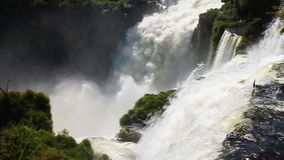Iguazu Falls stock video