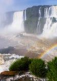Iguazu Falls in Brazil. General view on the grand Iguazu Waterfalls system in Brazil royalty free stock image