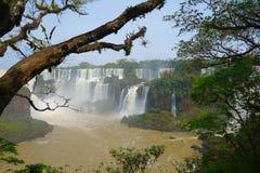 Iguazu Falls - Brazil Side. The Brazilian side of Iguazu Falls on a clear summers day Royalty Free Stock Image