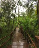 Wooden walkway in the jungles of Iguazu Falls, Argentina royalty free stock photography