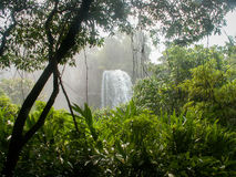 Iguazu Falls Waterfall Through Plants Stock Image