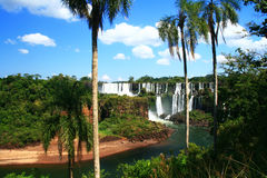 Iguazu Palms Royalty Free Stock Photography