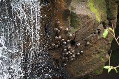 Iguazu valt zeldzame vogels Stock Afbeeldingen