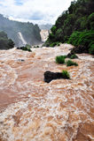 Iguazu waterfalls in Brazil Stock Image