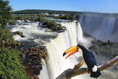 Iguazu waterfalls Royalty Free Stock Photo