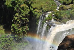 Iguazu Waterfalls with rainbow. Upper of the Iguazu waterfalls with a rainbow in the bottom Royalty Free Stock Image