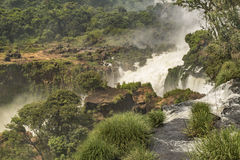 Iguazupark vanaf de Bovenkant van Watervallen Stock Afbeelding