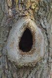 Ihålig stam av ett träd Royaltyfria Foton