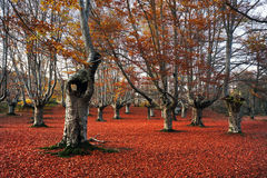 Ihålig tree Arkivbild