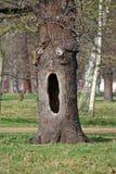 ihålig tree Arkivfoto