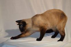 Ihre Cat Might verdorben werden stockbild