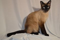 Ihre Cat Might verdorben werden lizenzfreie stockfotos