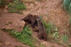 熊II 库存照片