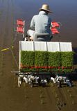 ii plantatorscy ryżu Obraz Stock