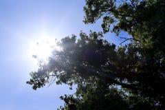 II soleggiato Fotografia Stock Libera da Diritti