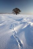 ii zima Fotografia Stock