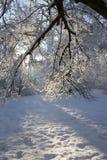 iii冬天 库存照片