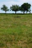 iii drzewa Zdjęcia Stock