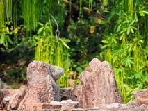 IIIrd czasu ruiny w słońce świątyni i natura, Konark Odisha Fotografia Stock