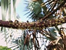 Iinsects en el brote de la flor Insecto en el salvaje Foto de archivo