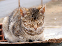 IInteresting and beautiful sleeping cat pictures suitable for advertisements and designs. Interesting and beautiful sleeping cat pictures suitable for Royalty Free Stock Photography