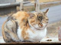 IInteresting och den härliga sova katten föreställer passande för annonseringar och designer Arkivbilder