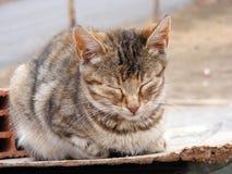 IInteresting och den härliga sova katten föreställer passande för annonseringar och designer Royaltyfri Fotografi