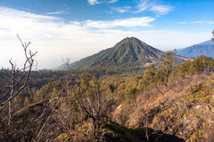 Ijen crater. Mount Meranti and vast forest of East Java, Indonesia. Dead dry trees are the effect of deforestation by fire at 2013 Stock Images