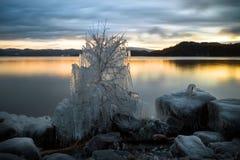 Ijs behandelde boom en kust van Jonsvatnet-meer in Noorwegen stock afbeeldingen