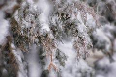 Ijs behandelde boomtak na een ijsonweer Stock Foto
