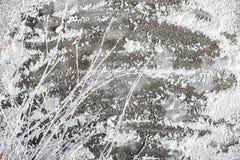Ijs en sneeuw met takjes Royalty-vrije Stock Fotografie