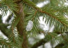 Ijs op de winterspar stock foto