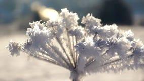 Ijs van de de installatiesneeuw van de de winter het boszon stock footage