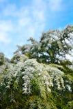 Ijs verglaasde bomen na de winteronweer Royalty-vrije Stock Afbeeldingen