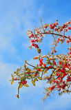 Ijs verglaasde bomen na de winteronweer Royalty-vrije Stock Foto's