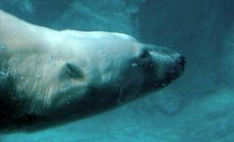 Ijsbeer onder water Stock Afbeelding