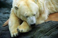 Ijsberen Royalty-vrije Stock Afbeeldingen