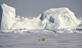 Ijsberen onder een ijsberg stock afbeeldingen
