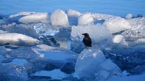 Ijsbergen bij ijsmeer Ijs en Sneeuw het Landschap van de de Winteraard Ijslagune stock video