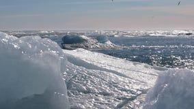 Ijsbergen die uit aan de oceaan afdrijven stock videobeelden