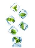 Ijsblokjes met groene muntbladeren Stock Foto's